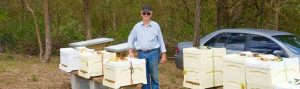 Bees Toowoomba, beefood protein